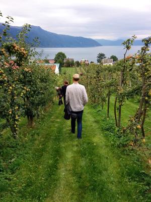 Inspeksjon av epler fra Balestrand.