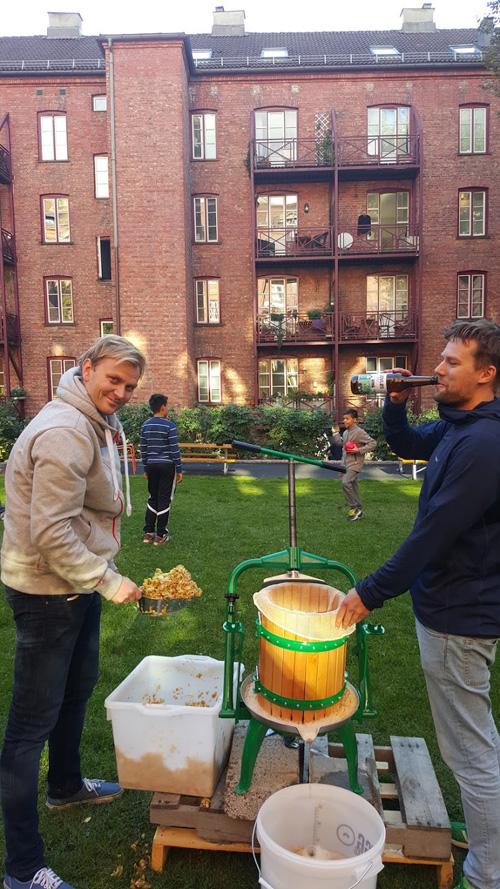 Mikael og Martin presser epler, selv om det ikke er lov å drikke på offentlig sted.